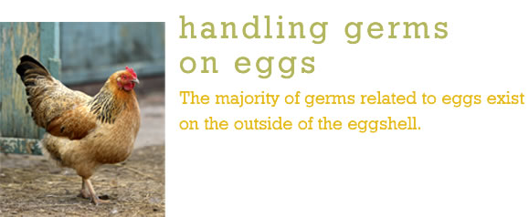 Eggs, Germs on